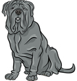 Neapolitan mastiff dog cartoon vector