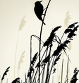 A bird sitting on reed during the summer day vector