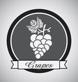 Grapes design vector