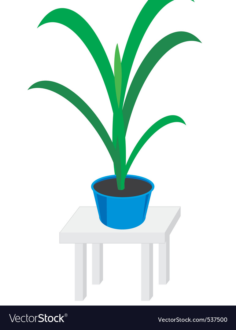 Home plants in pot vector | Price: 1 Credit (USD $1)