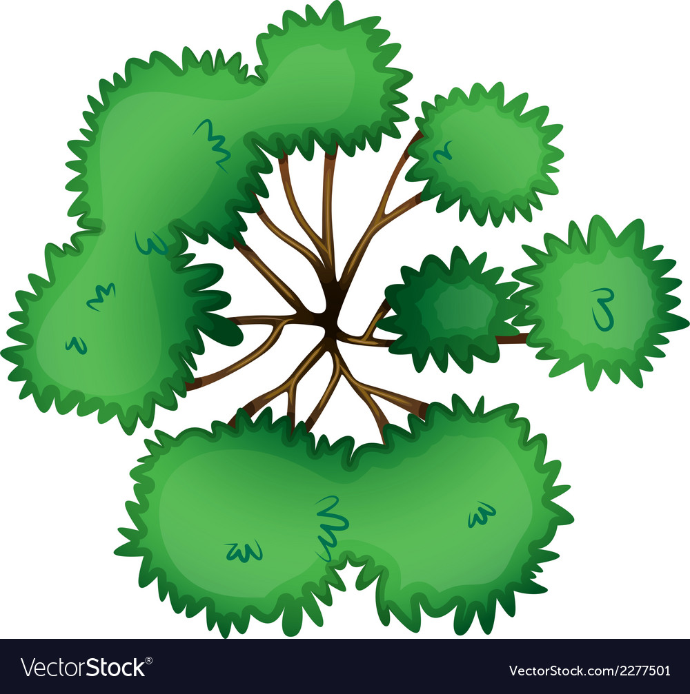 A topview of a tree vector | Price: 1 Credit (USD $1)