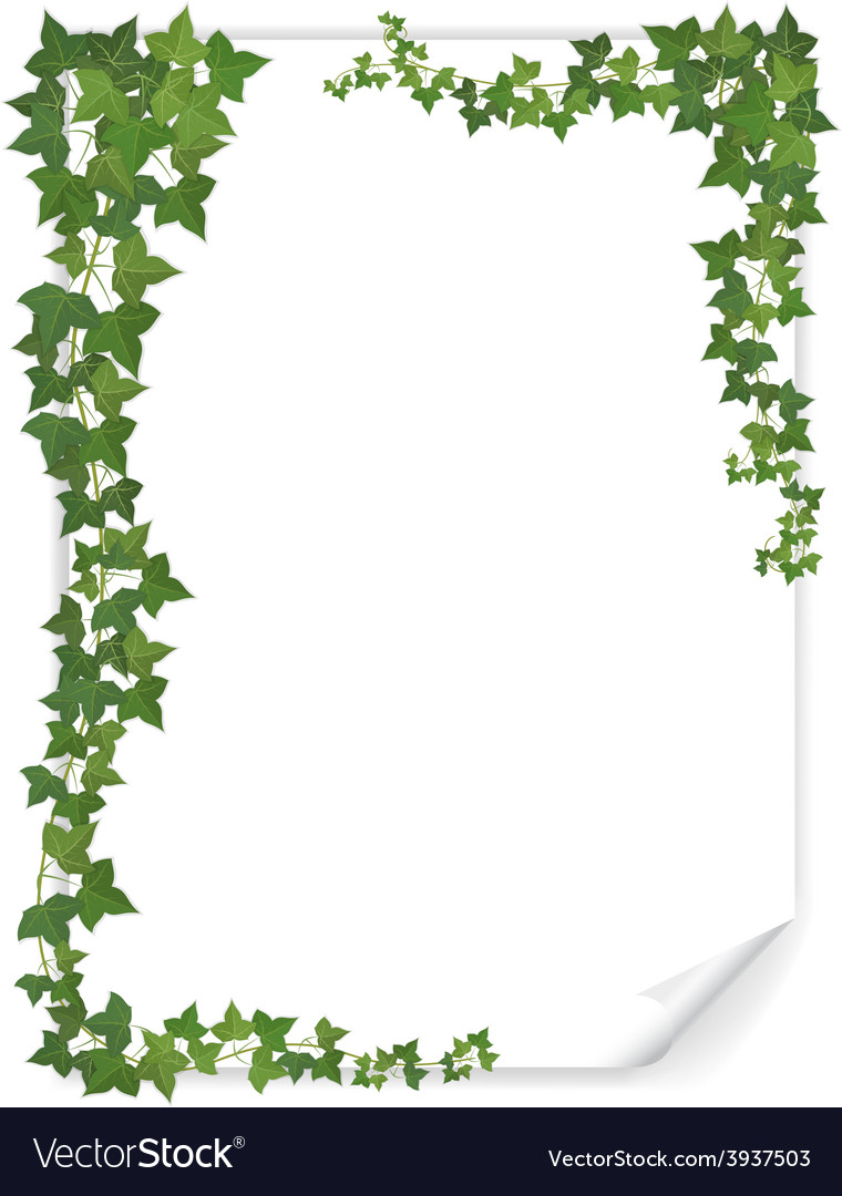 White paper sheet decorated ivy vector | Price: 1 Credit (USD $1)