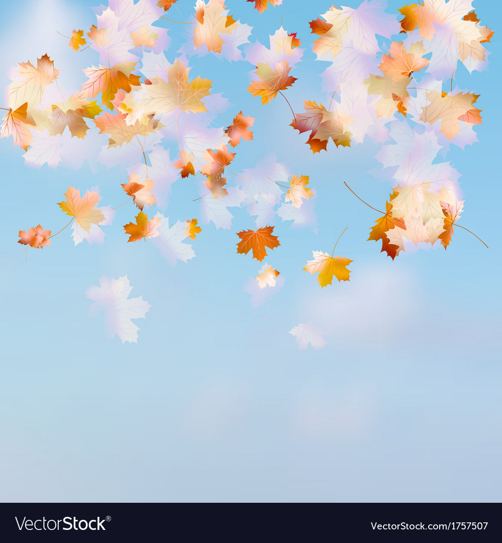 Autumn leaves on the sky eps 10 vector | Price: 1 Credit (USD $1)