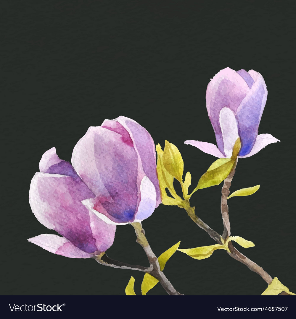 Watercolor magnolia flowers vector | Price: 1 Credit (USD $1)