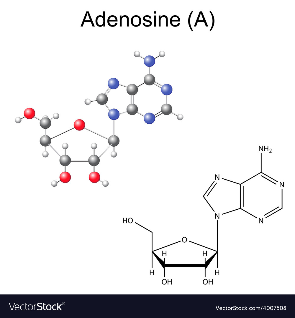 Chemical formula and model of adenosine vector | Price: 1 Credit (USD $1)