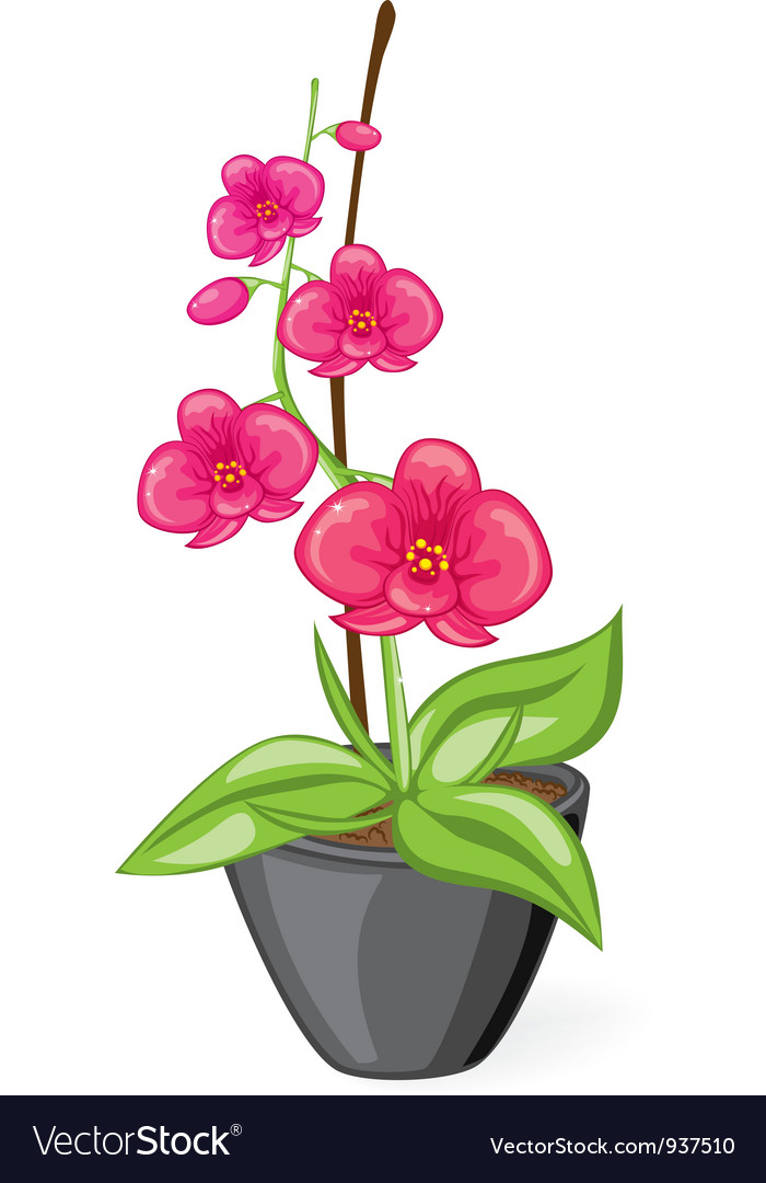 Pink orchid in the pot vector | Price: 1 Credit (USD $1)