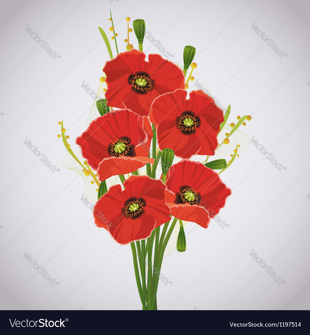 Beautiful celebratory bouquet of red poppies vector | Price: 1 Credit (USD $1)