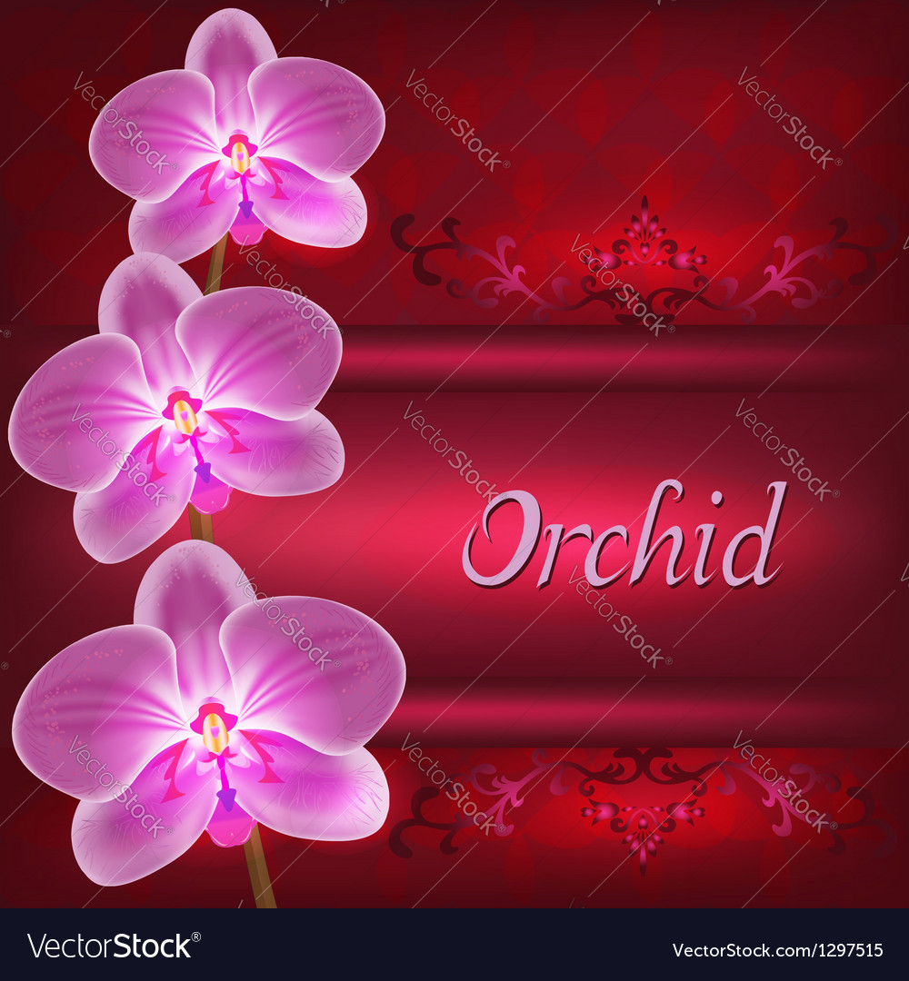 Greeting or invitation card with orchid flower vector | Price: 1 Credit (USD $1)