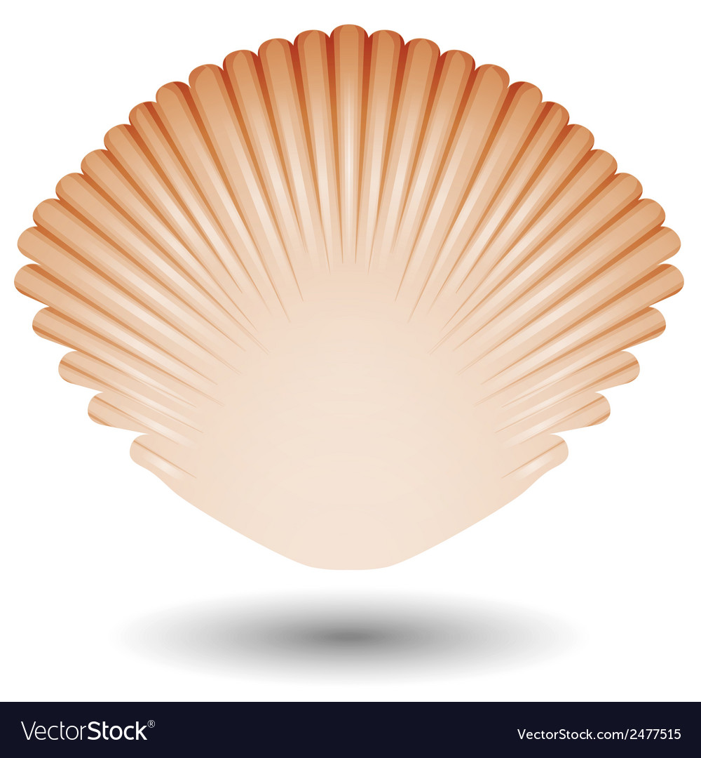 Sea shell icon vector | Price: 1 Credit (USD $1)