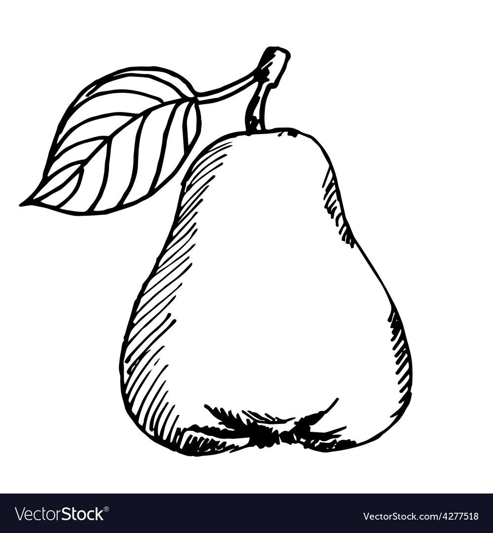 Pear sketch vector | Price: 1 Credit (USD $1)