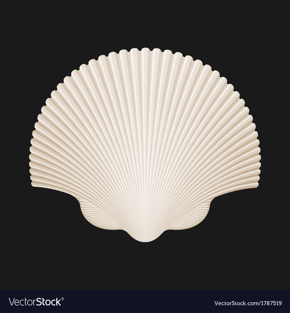 Brown scallop shell isolated on black vector | Price: 1 Credit (USD $1)