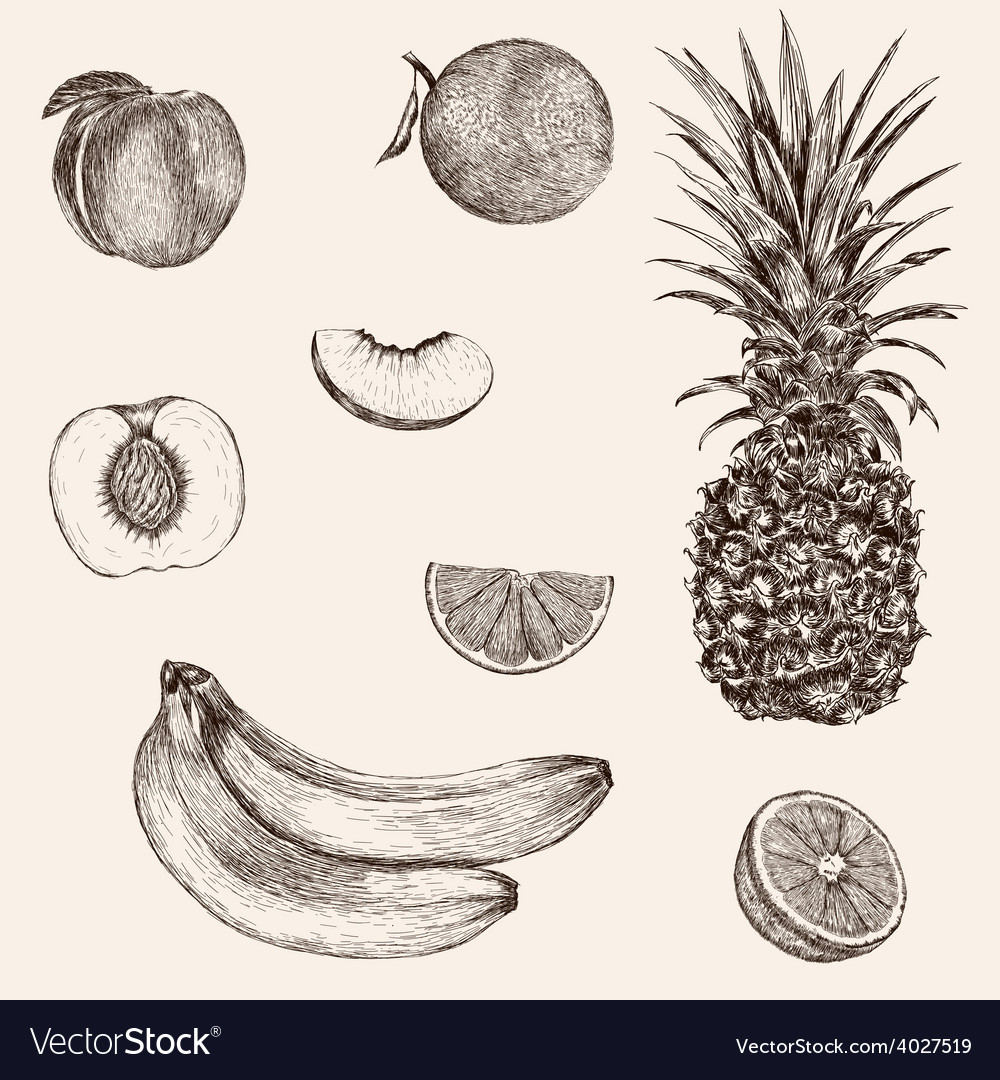Sketch banana pineapple peach orange hand drawn vector | Price: 1 Credit (USD $1)