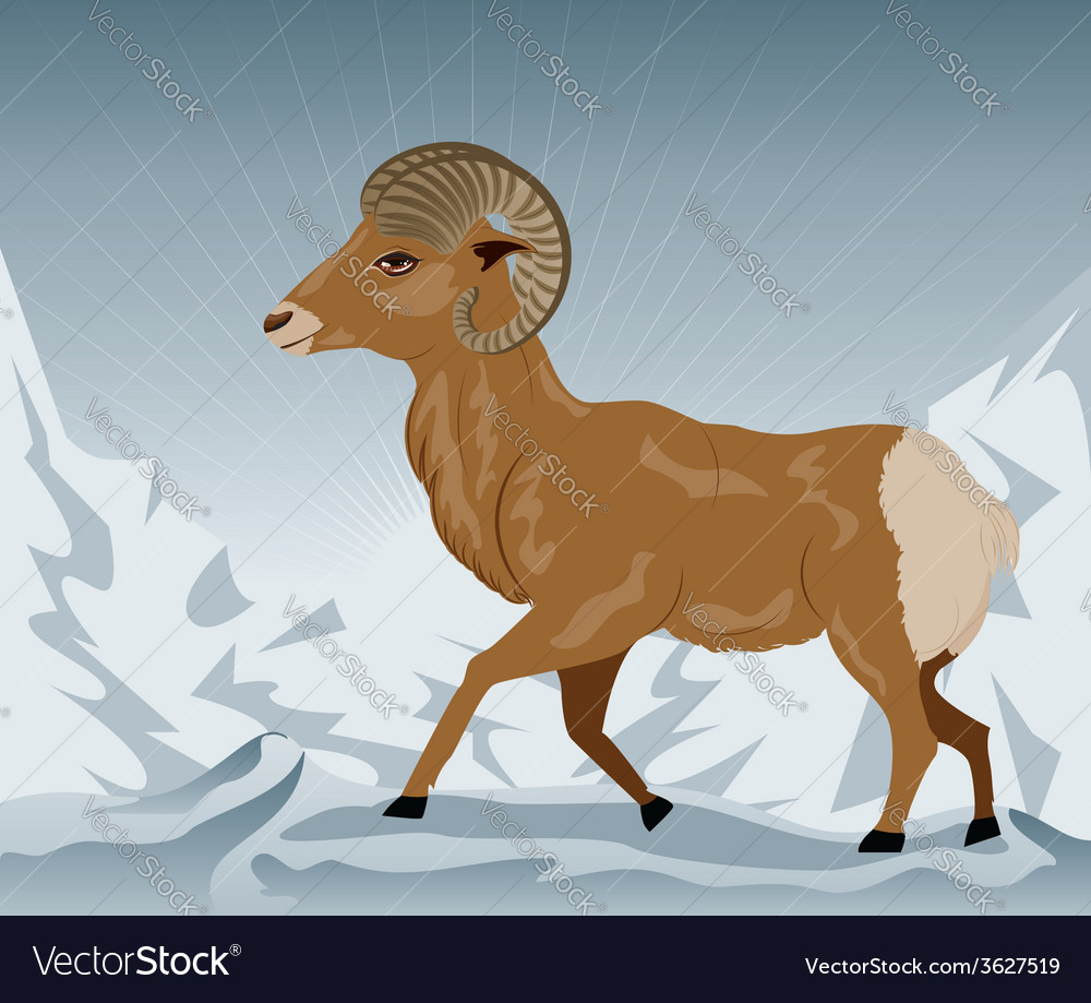 Wild ram in the mountains2 vector | Price: 1 Credit (USD $1)