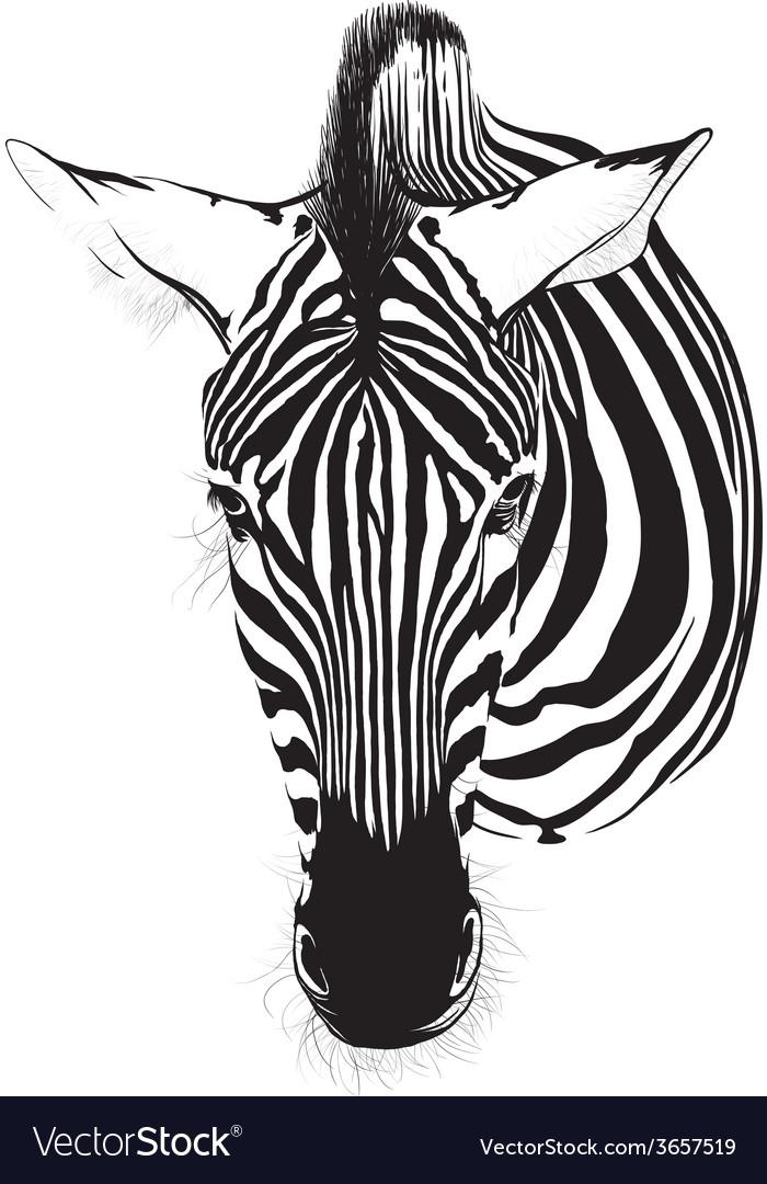 Zebra vector   Price: 1 Credit (USD $1)