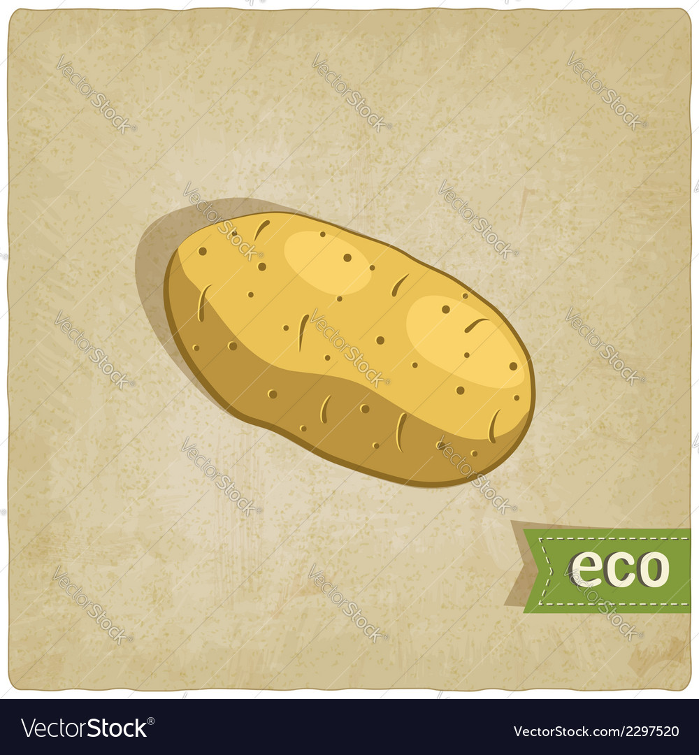 Potato eco background vector | Price: 1 Credit (USD $1)
