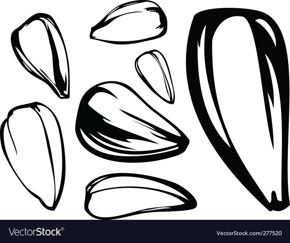 Set of sunflower seed vector