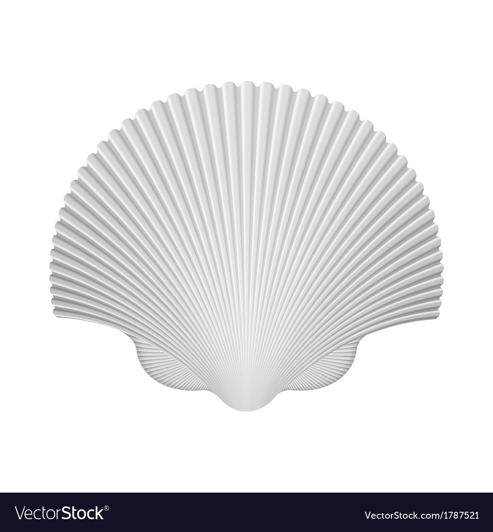 Scallop shell isolated on white vector | Price: 1 Credit (USD $1)