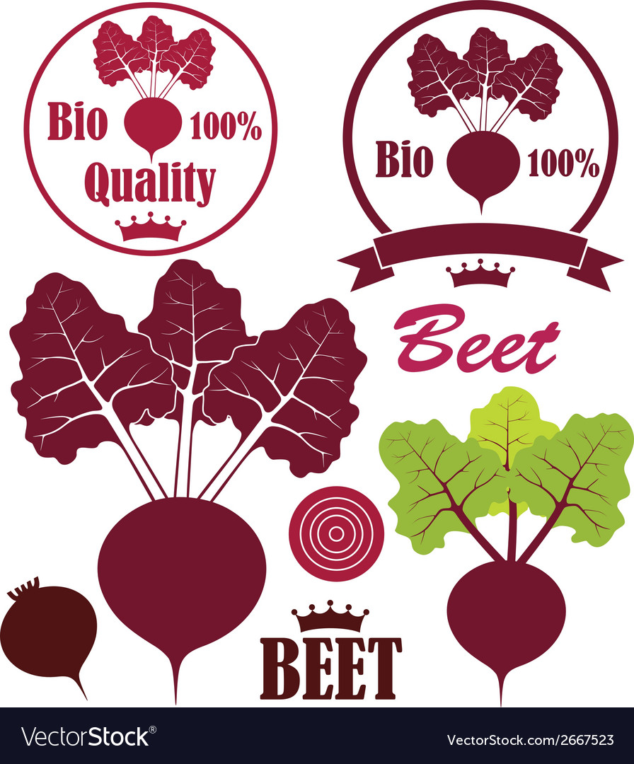 Beet vector | Price: 1 Credit (USD $1)