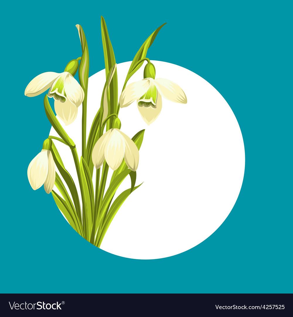 Snowdrop flowers vector | Price: 1 Credit (USD $1)