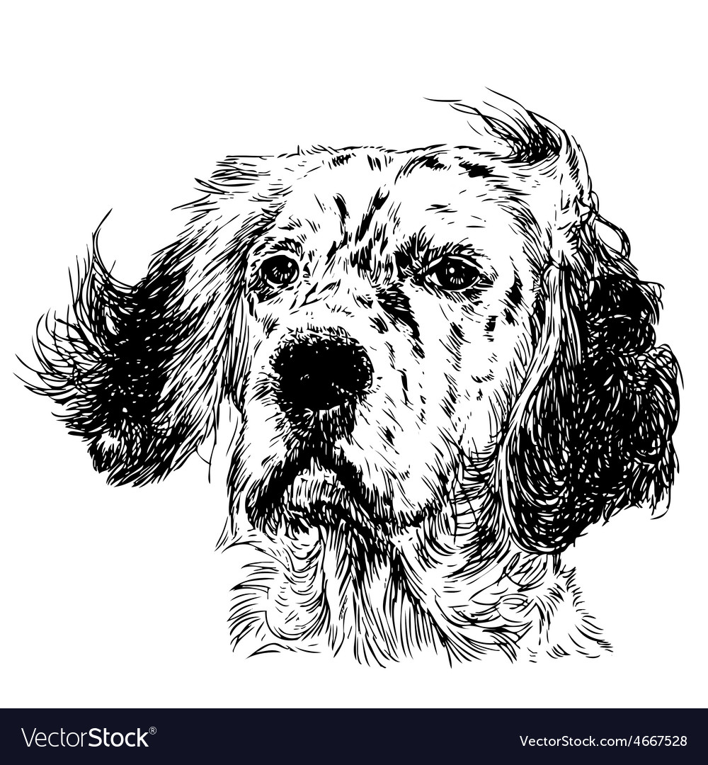 English setter 03 vector | Price: 3 Credit (USD $3)