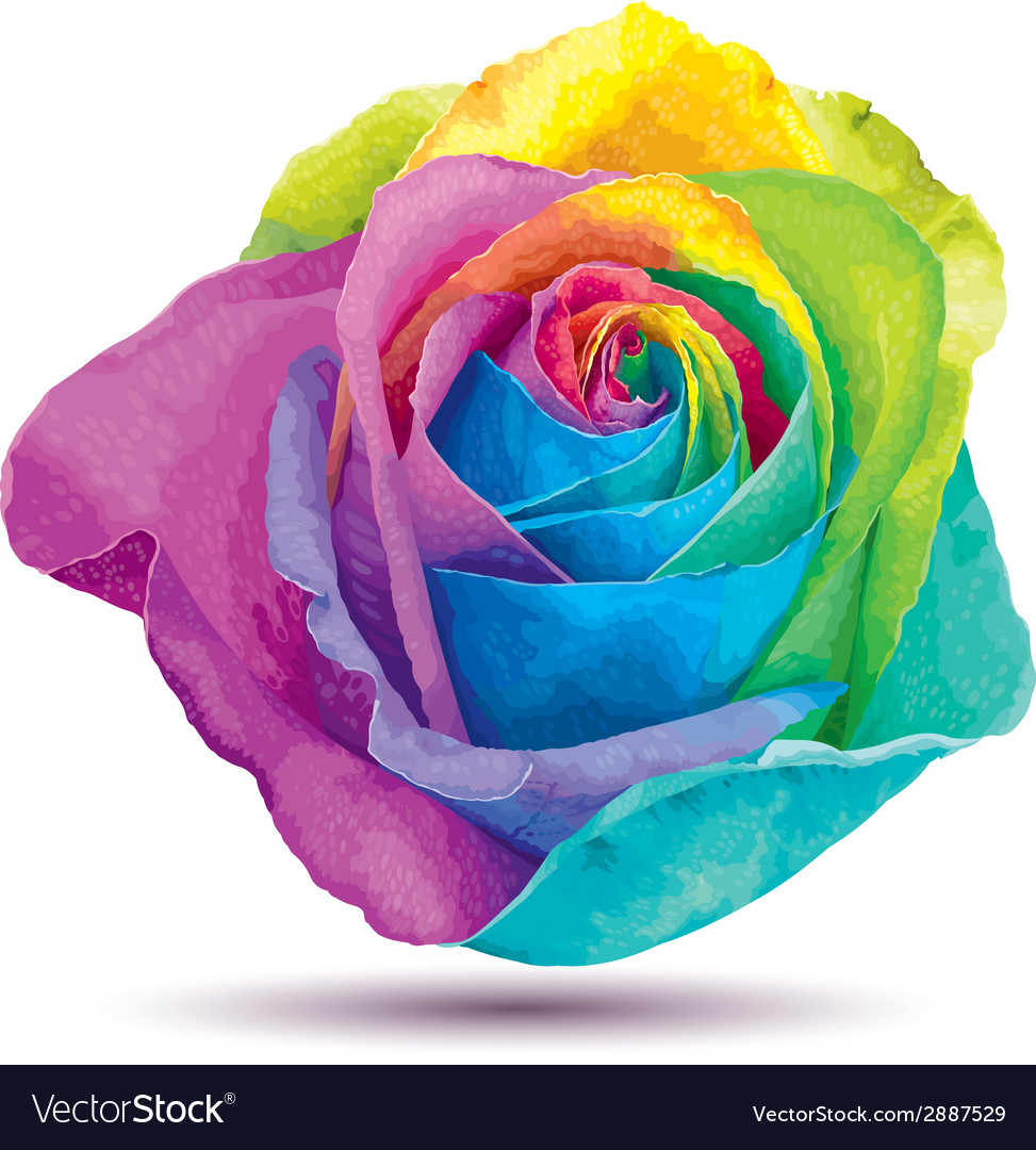 Raibow rose vector