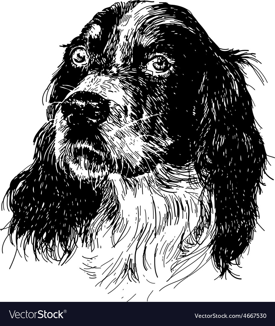English setter 06 vector | Price: 3 Credit (USD $3)