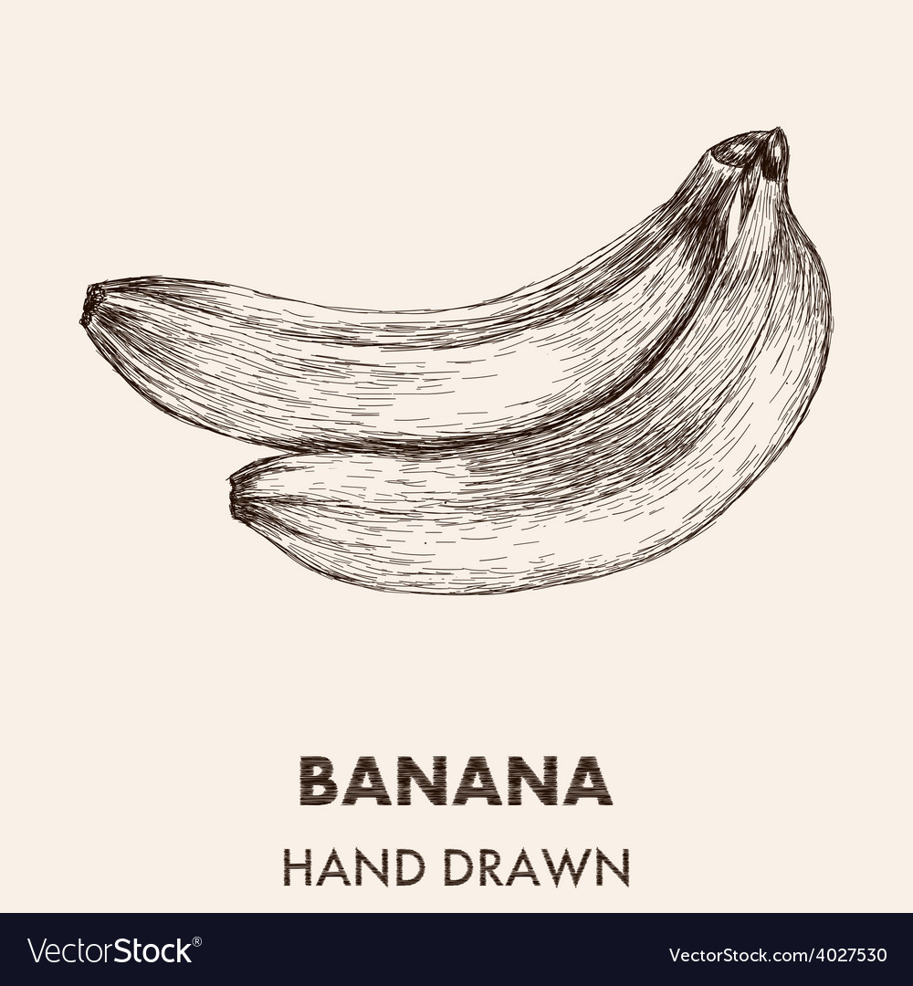 Sketch banana hand drawn fruit collection vector | Price: 1 Credit (USD $1)
