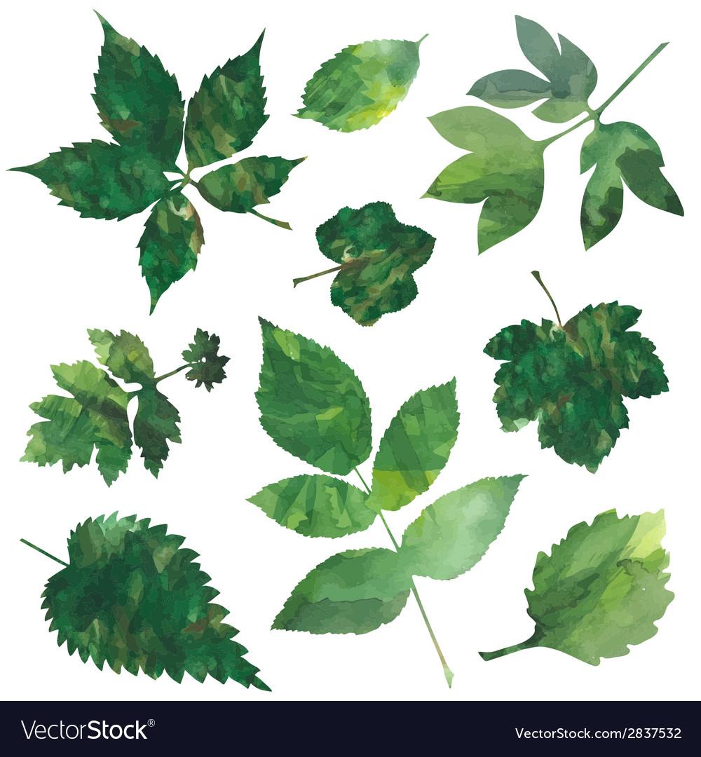 Leaves set vector | Price: 1 Credit (USD $1)