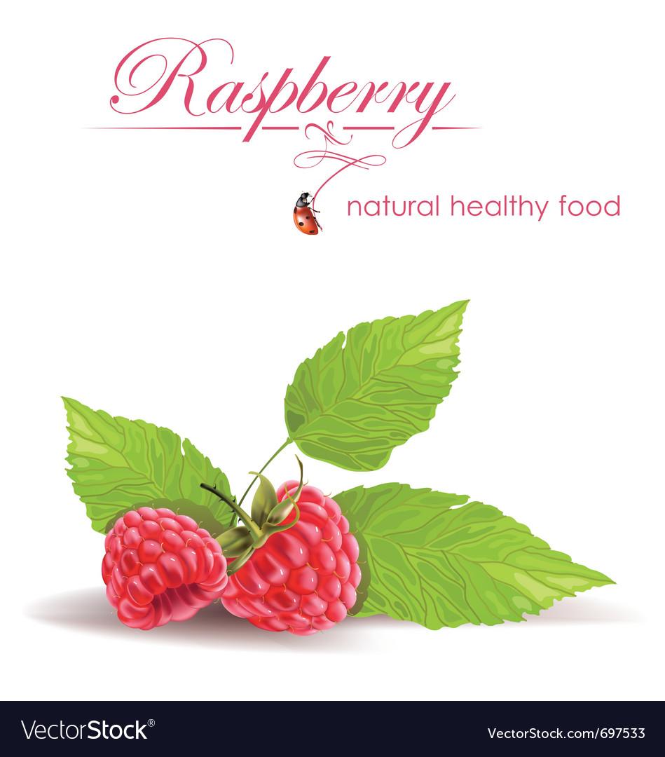 Raspberry vector | Price: 3 Credit (USD $3)