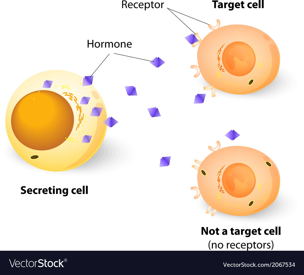 Target cell vector | Price: 1 Credit (USD $1)