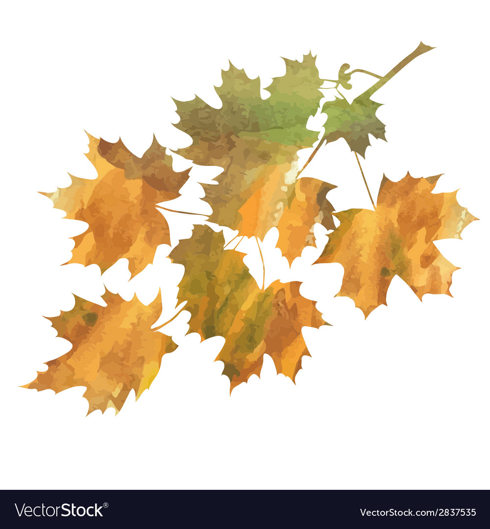 Maple branch vector | Price: 1 Credit (USD $1)