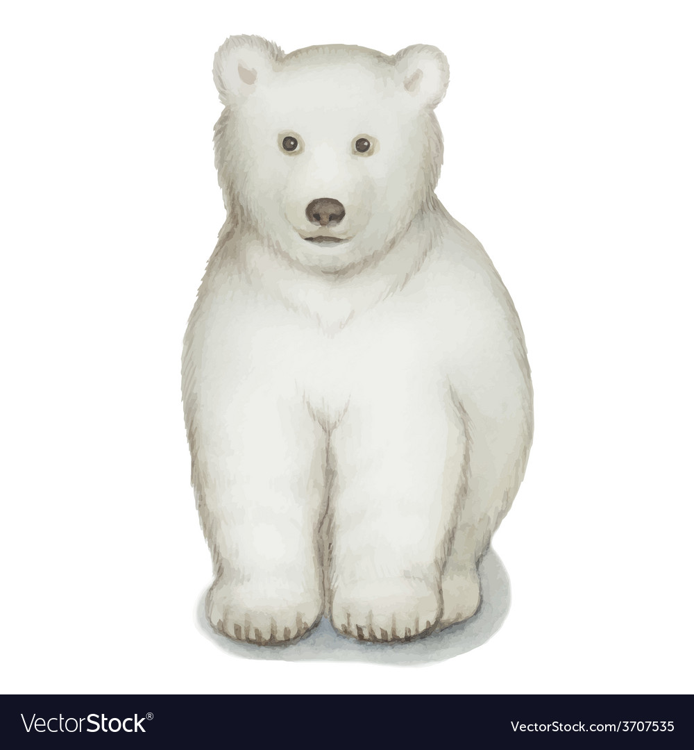 Polar bear watercolor isolated on a white backgro vector   Price: 1 Credit (USD $1)