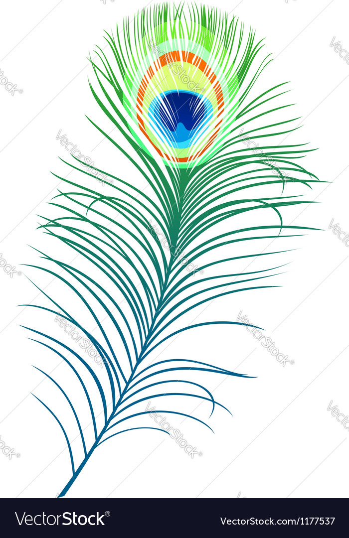 Feather of peacock vector | Price: 1 Credit (USD $1)
