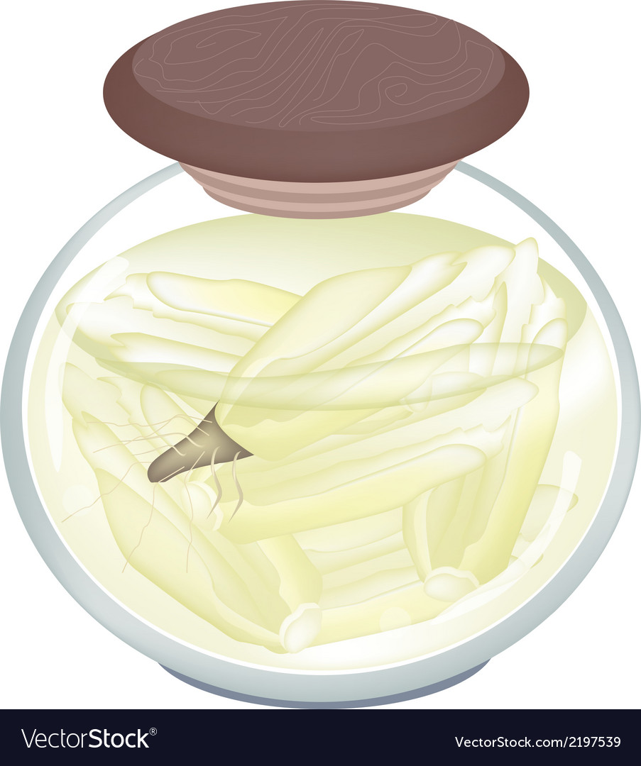 Jar of pickled endivia in malt vinegar vector | Price: 1 Credit (USD $1)
