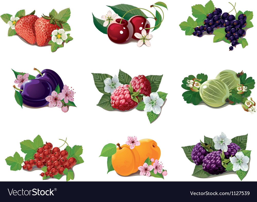 Set of ripe fruits vector | Price: 1 Credit (USD $1)