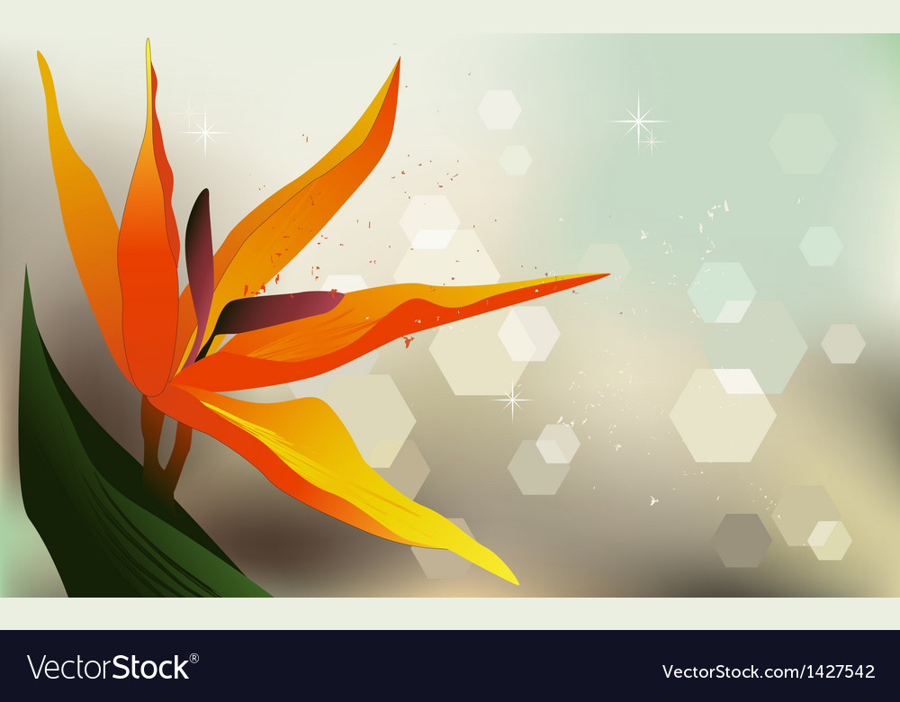 Floral background strelitzia - desktop wallpaper vector | Price: 1 Credit (USD $1)