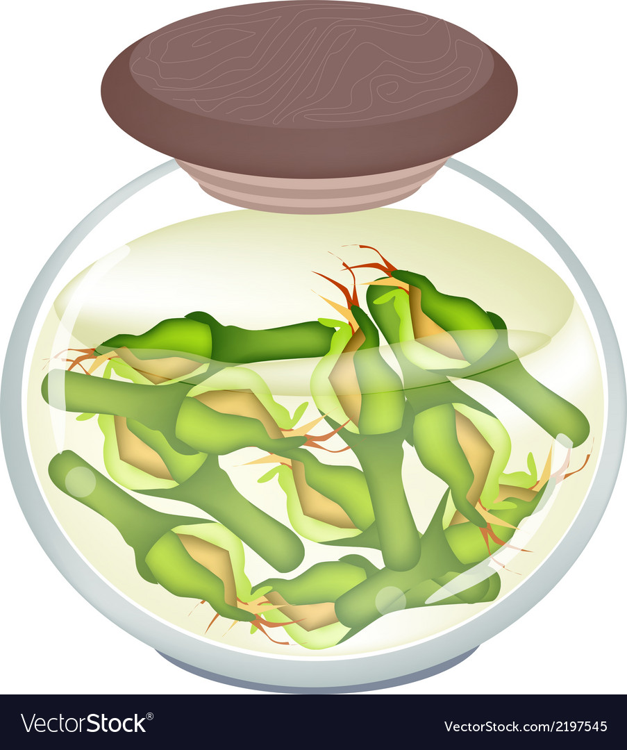Jar of zucchini pickles in malt vinegar vector | Price: 1 Credit (USD $1)