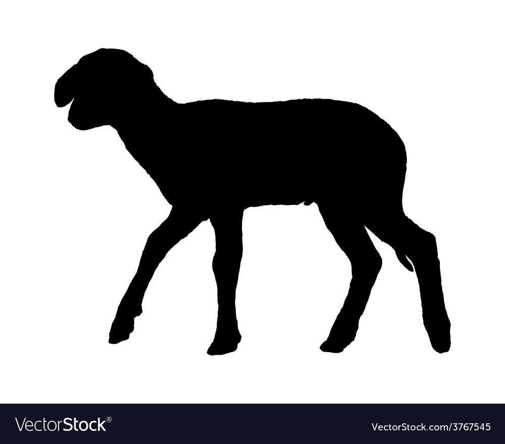 Lamb on white vector | Price: 1 Credit (USD $1)