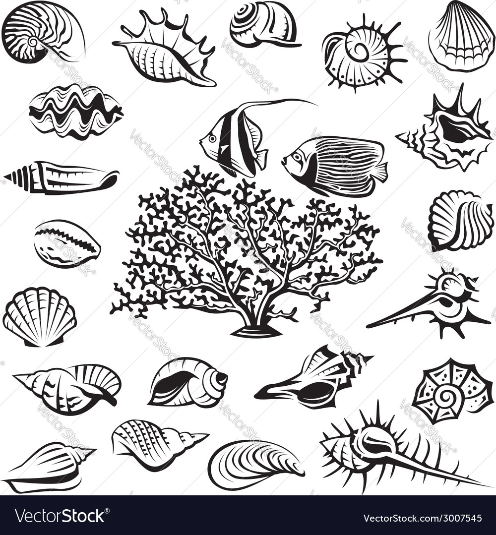 Seashells set vector | Price: 1 Credit (USD $1)