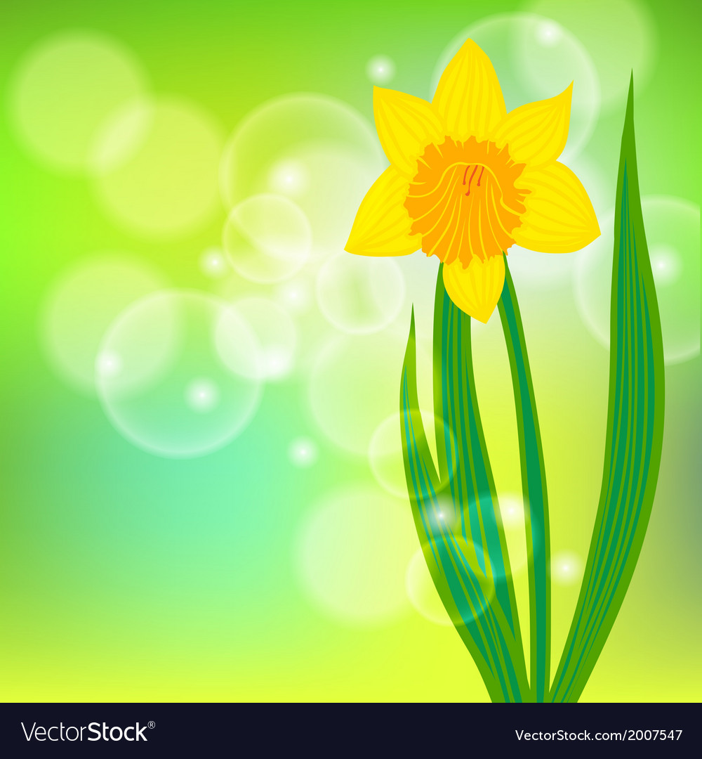 Card with daffodil on light green bokeh vector   Price: 1 Credit (USD $1)