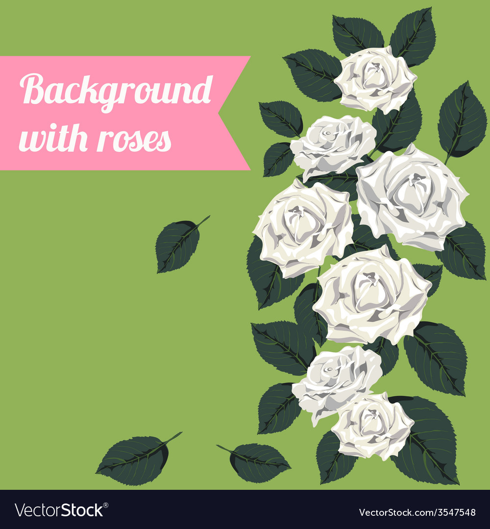 Colorful background with white roses vector | Price: 1 Credit (USD $1)