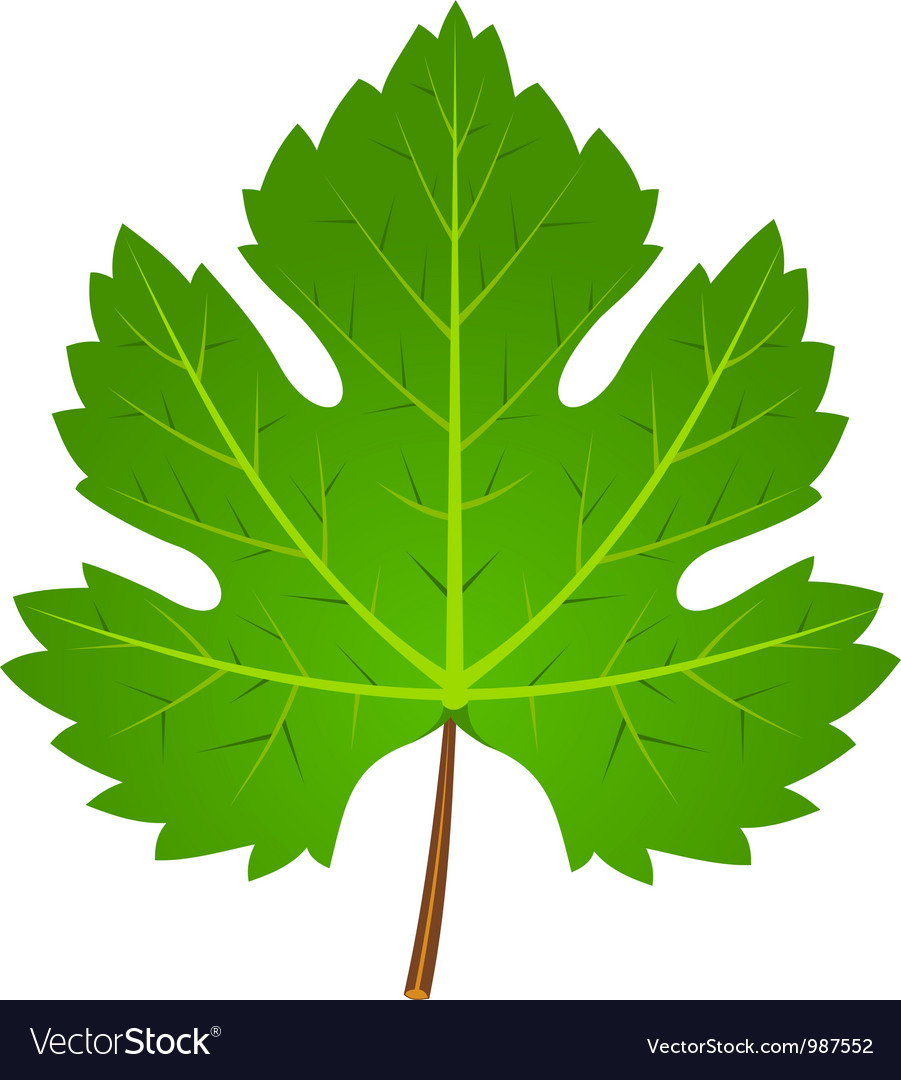 Green wine leaf vector | Price: 1 Credit (USD $1)