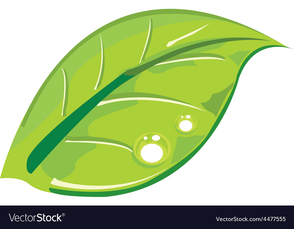 Leaf design vector | Price: 1 Credit (USD $1)