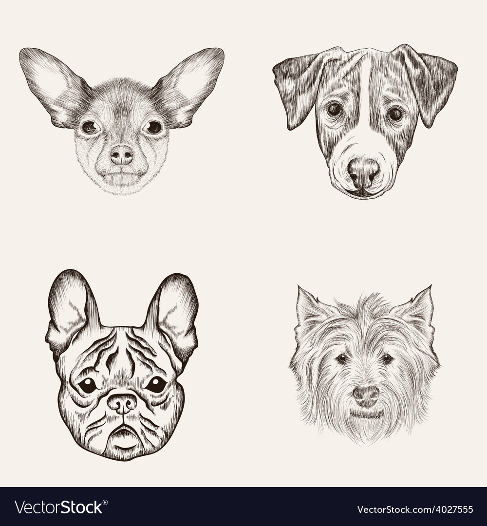 Sketch bulldog terriers hand drawn realistic faces vector | Price: 1 Credit (USD $1)