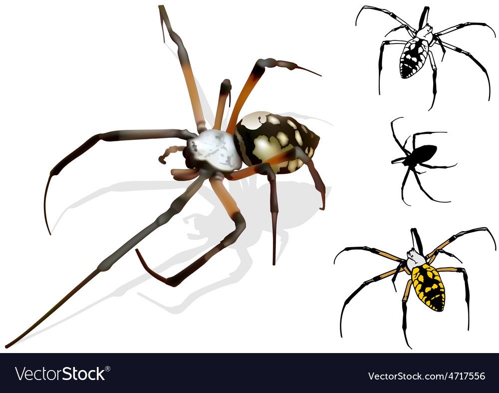 Wasp spider vector