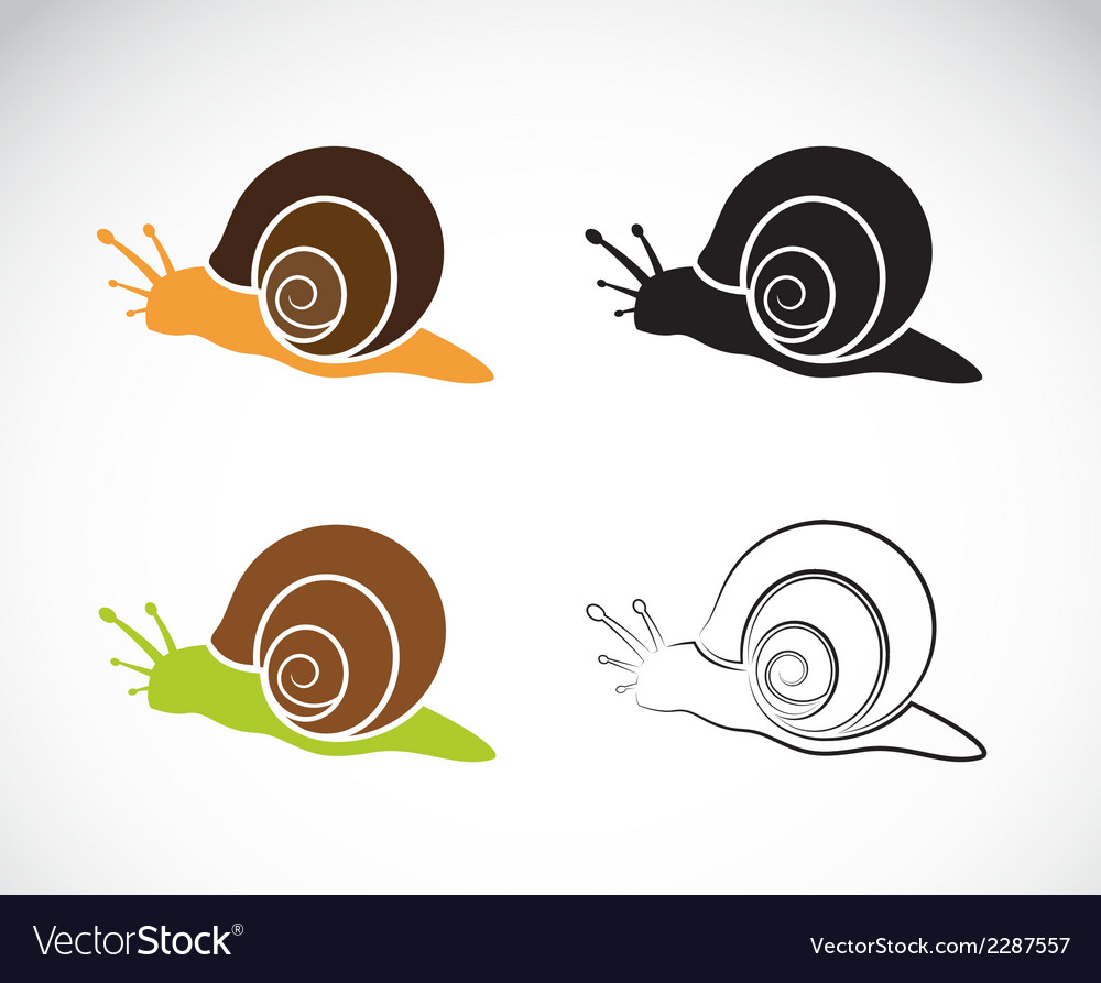 Image of an snail vector | Price: 1 Credit (USD $1)