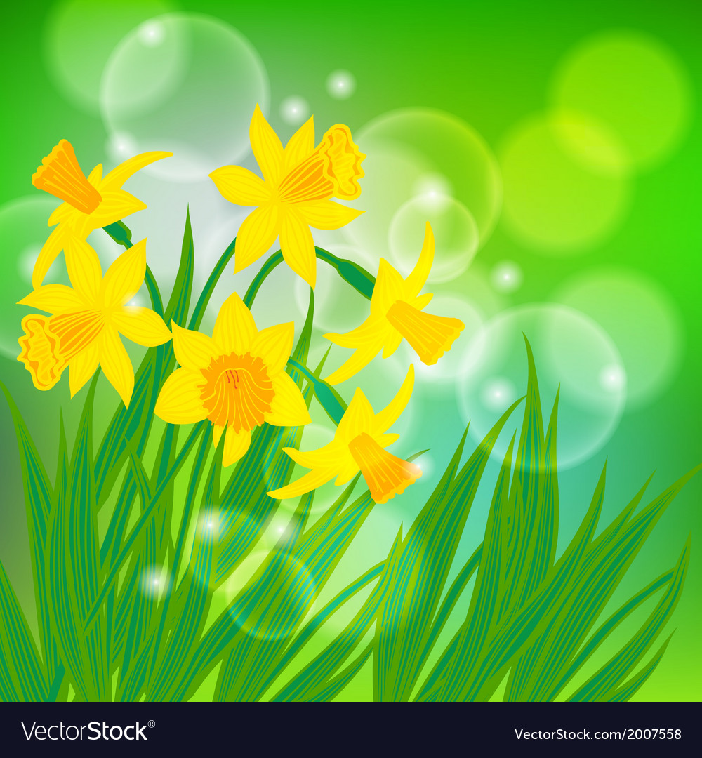 Card with daffodils on light green bokeh vector   Price: 1 Credit (USD $1)