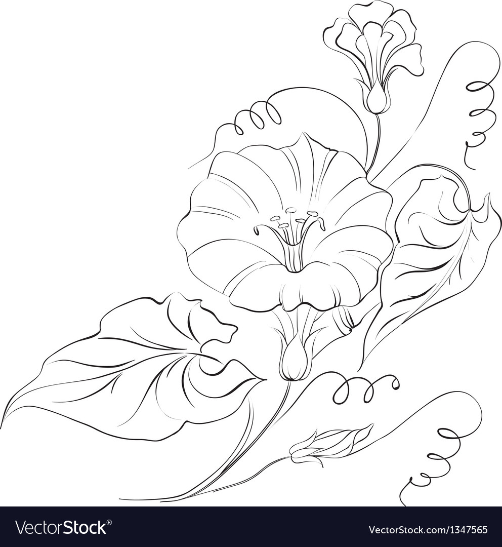 Bindweed flower in white vector | Price: 1 Credit (USD $1)