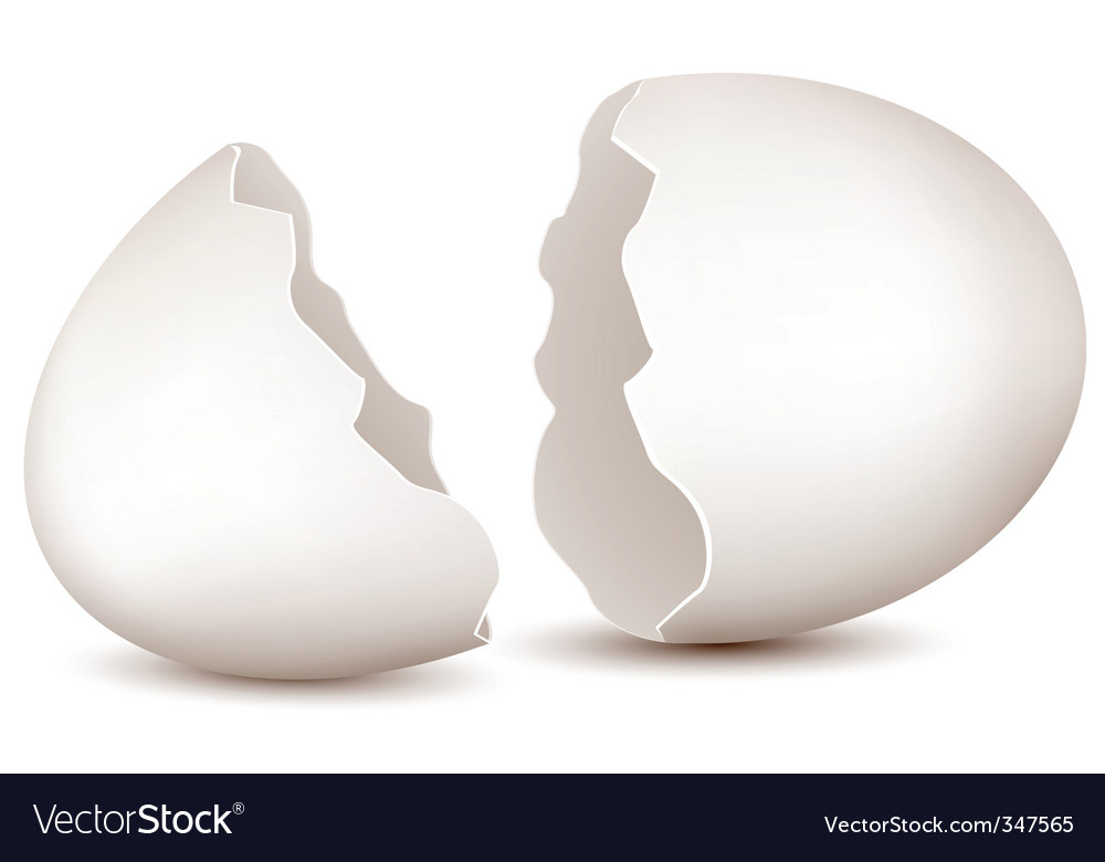 Broken egg vector | Price: 1 Credit (USD $1)