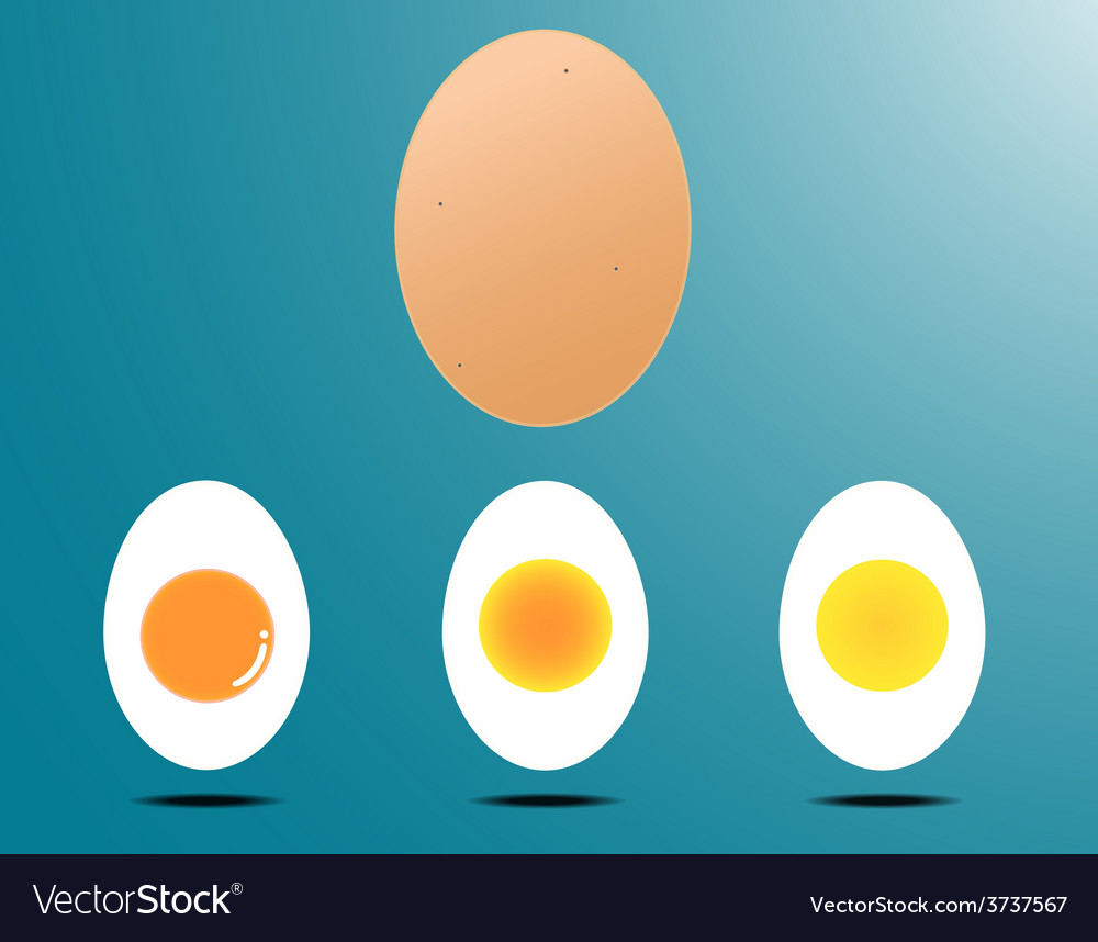 Boiled egg vector | Price: 1 Credit (USD $1)